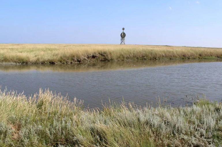 Das Ostvorland rund um die Ostbake prägen die Salzwiesen