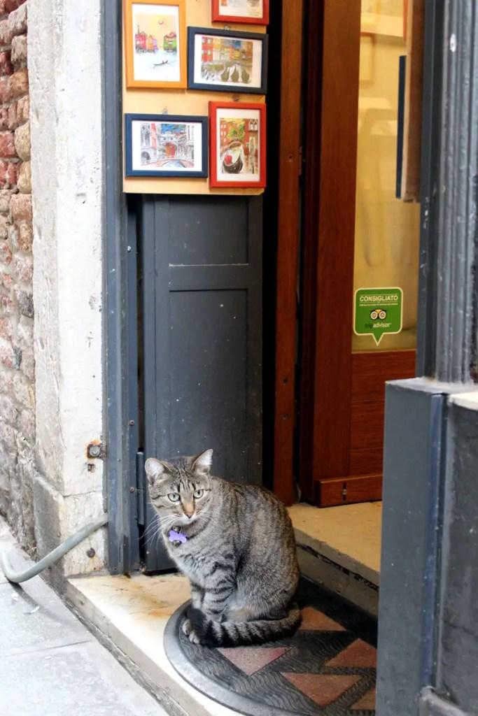 Die Katze beobachtet das Treiben in der Gasse