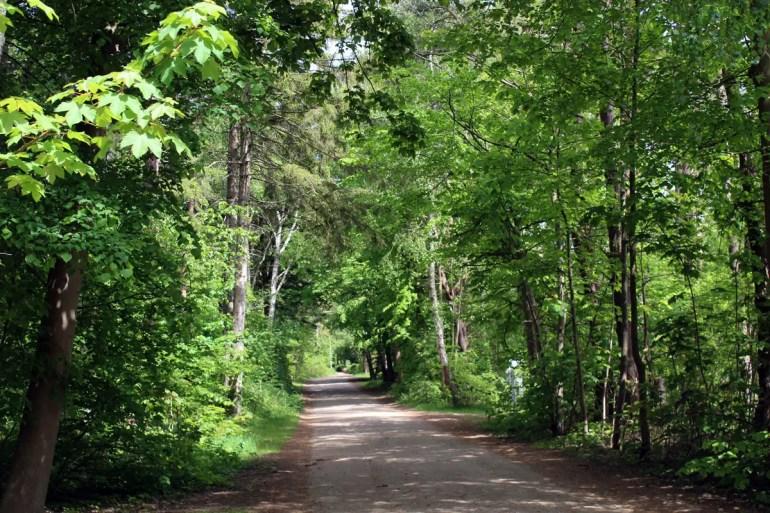 Der Radweg im Westen führt mitten durch den Wald