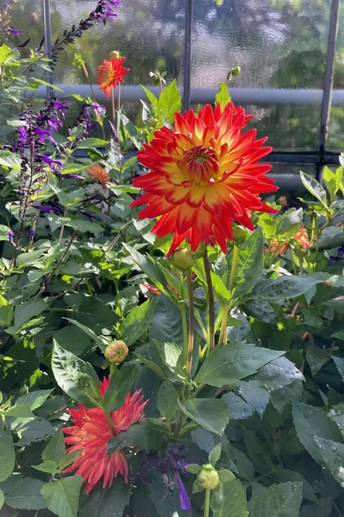 Eine Blume im Botanischen Garten