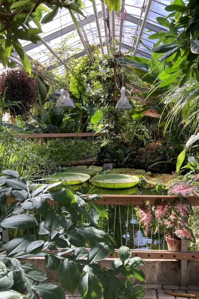 Wasserpflanzen im Botanischen Garten