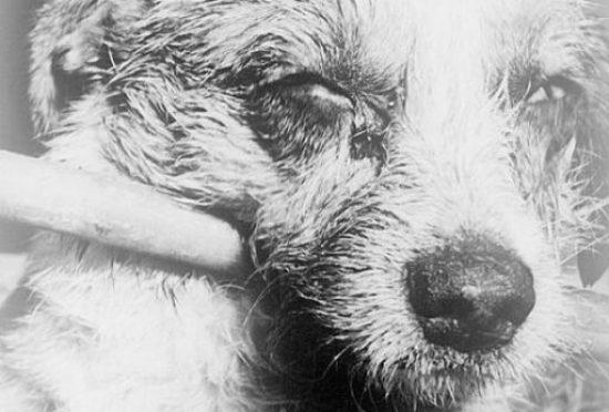 rabies china beijing vaccine