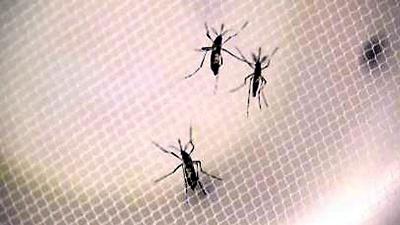 Zika-mosquitos-not-for-media-gallery-JPG_20160729142709-159532