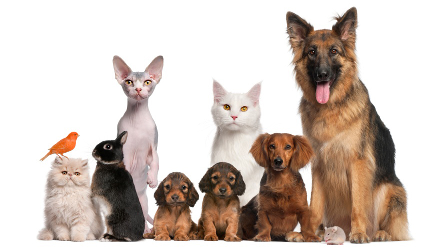 pets--dog--cat--rabbit--puppy--bird-jpg_158977_ver1_20170331210607-159532