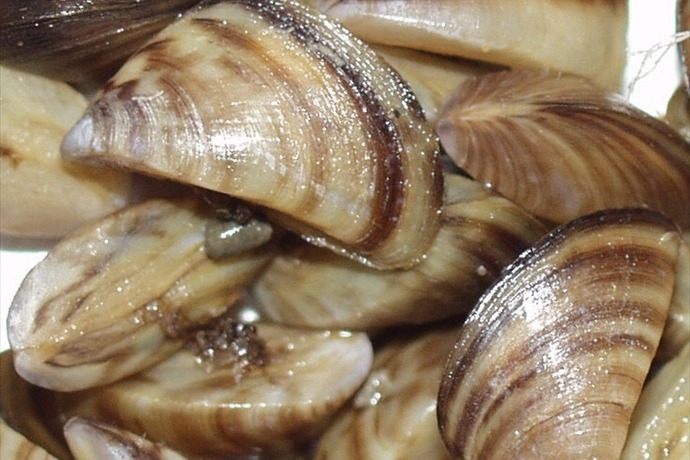 17 Texas lakes now confirmed with invasive ze mussels | KAMR ... on