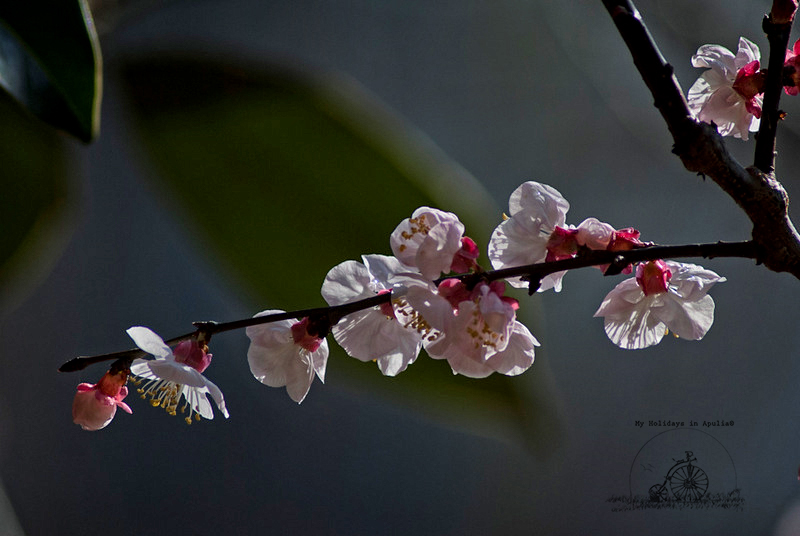 Willkommen Frühling