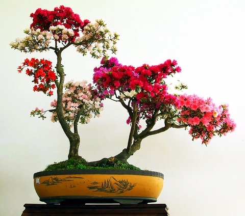 bonsai-planter