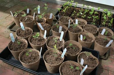 Seedling Update!