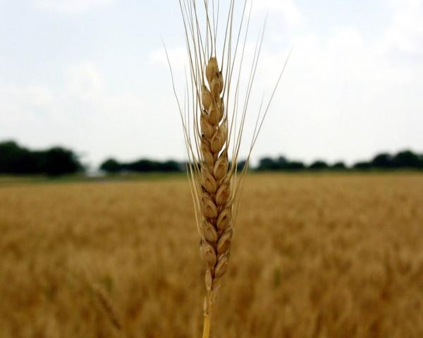 The Tangled Web of Bread | myhumblekitchen.com