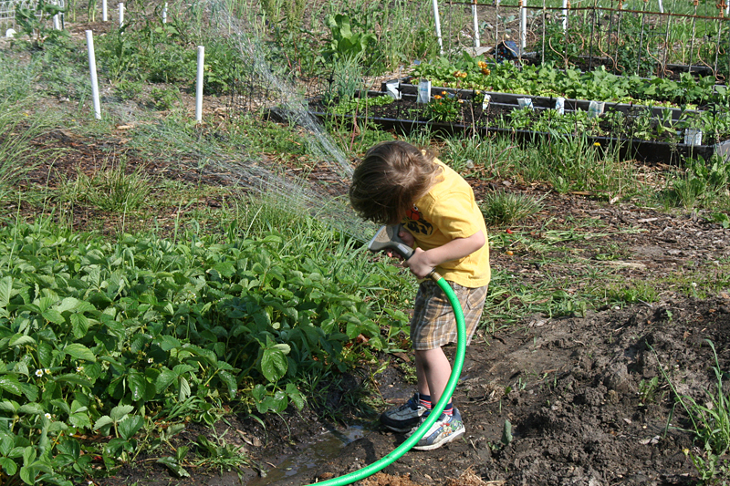 Your Kids Can Garden Too - 5 Simple Tasks Your Kids Can Do in the Garden!   myhumblekitchen.com