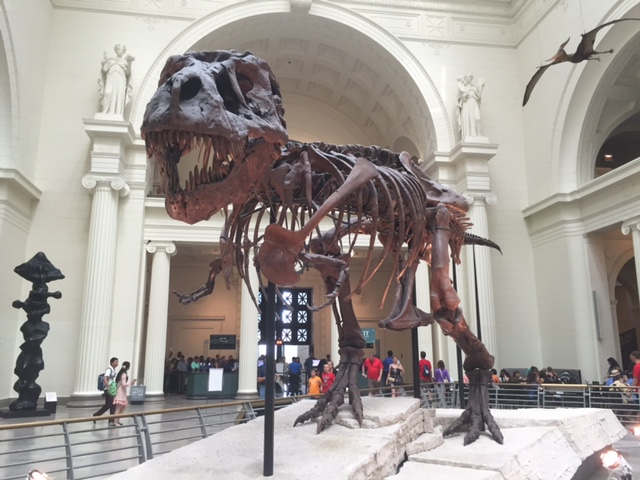 Chicago Field Museum T-rex