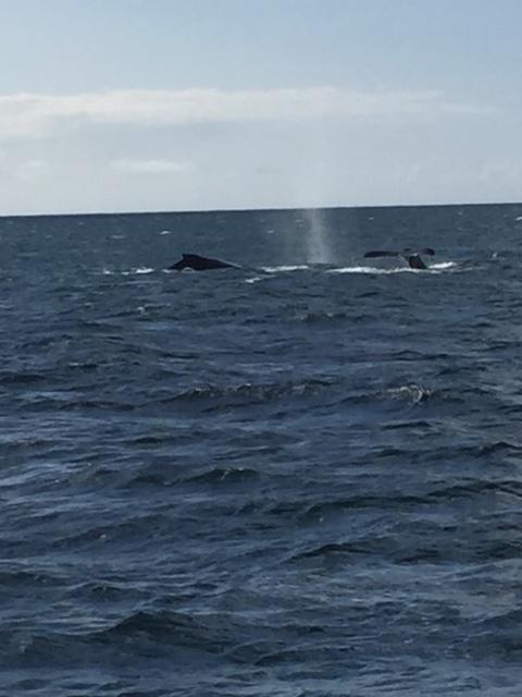 Whale sighting - Napali Coast - Kauai, Hawaii