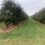 Edwards Apple Orchard