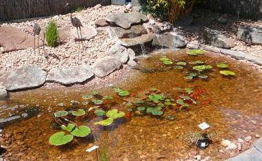 How to build a fish pond
