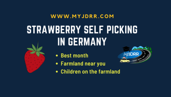 Strawberry self picking from the farmland in Germany