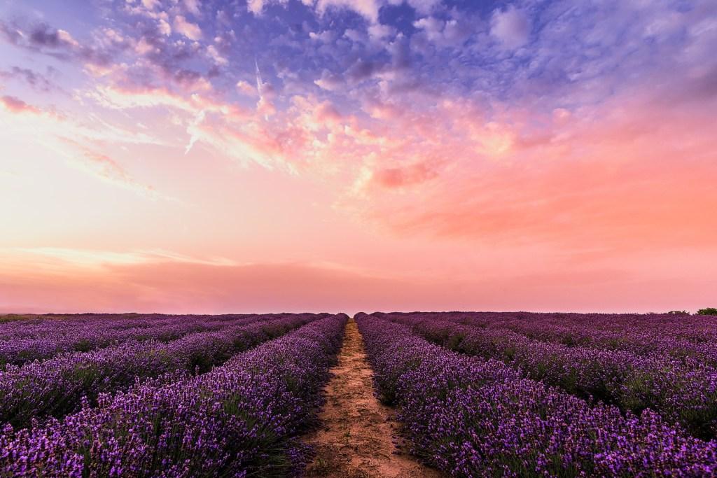 My kind of Zen - Lavender plantation