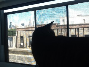 cat at window with screen