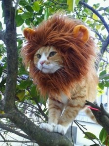 Lion cat Halloween Kitty costume