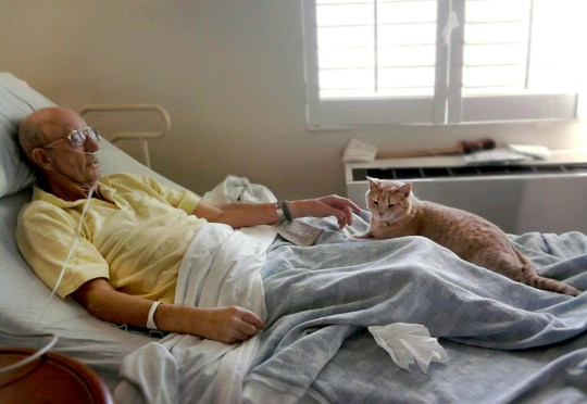 Dying vet with cat