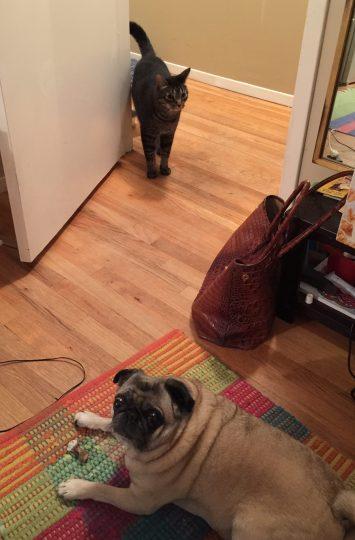 dog wonders let cat in?