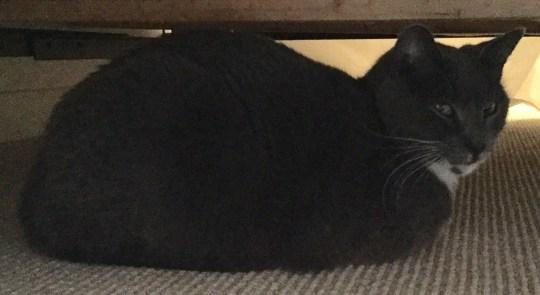 turkey body in sick cat