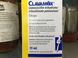 antibiotic liquid for cats in fridge