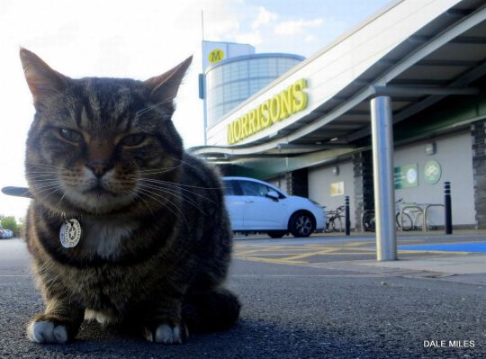 Brutus the supermarket cat honored