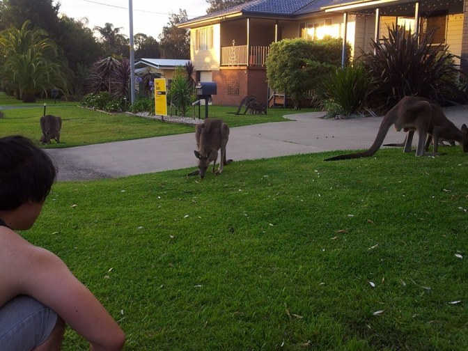 Mr Gwon and kangaroos