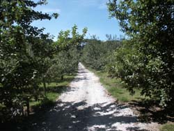 Cornish Cider Farm