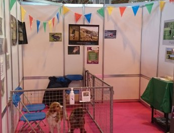 Brittany stand at discover dogs, Crufts 2015