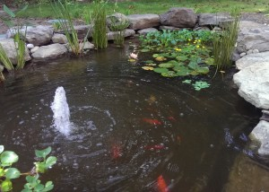 Photo of Koi Pond