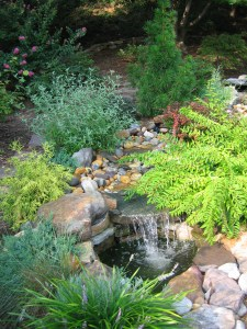 Photo of waterfall and plants