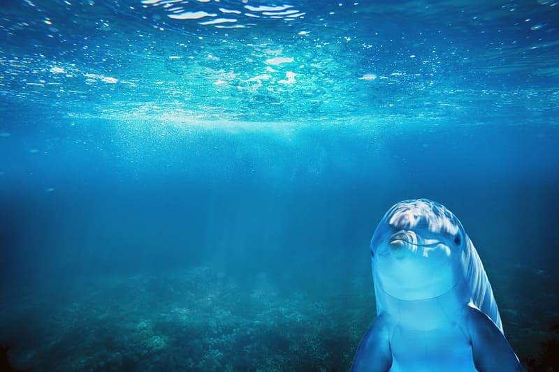 Vous voulez savoir ou nager avec des dauphins dans le monde ? Suivez le guide !