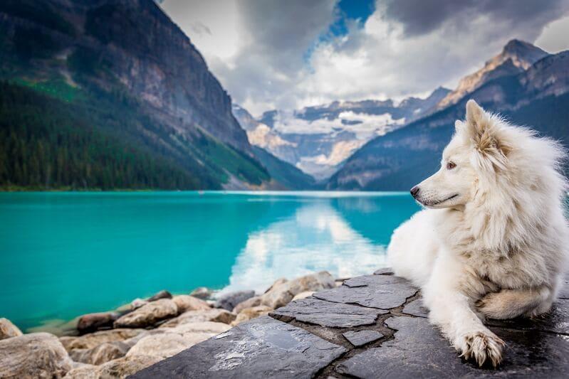 que voir au canada - paysage naturel et chien assis
