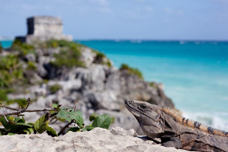 Iguan mexique côte et océan