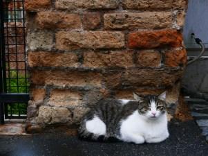 Cat Sanctuary of the Piazza Argentina