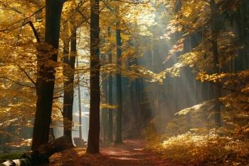https://i2.wp.com/www.mylifechanges.com/images/blog/Autumn-forest.jpg