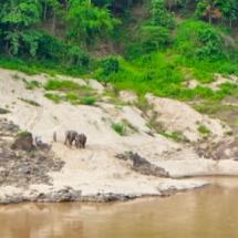 elephants @ mekong