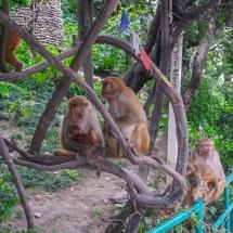 Kathmandu-monkeys