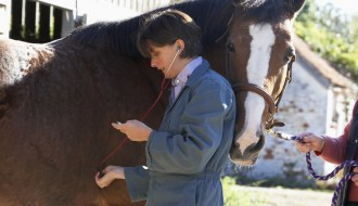 How to take the vital signs of your horse yourself
