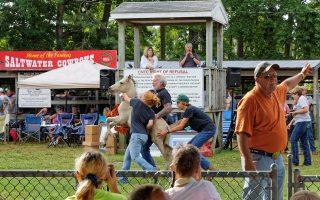 Wild Pony Auction at Chincoteague Island