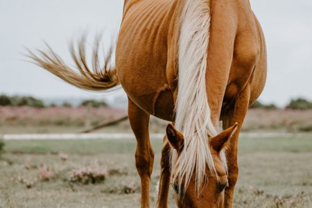 Why horses lose weight