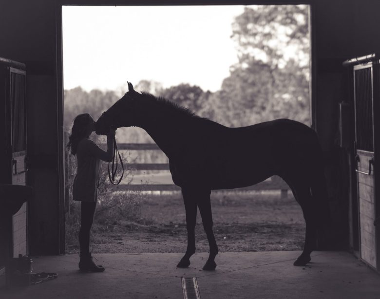 Everything you need to know about buying your first horse
