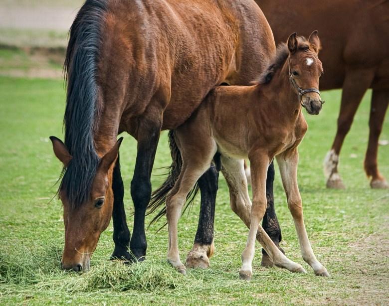 Horses and their sense of balance