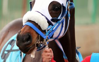 How to retrain a former racehorse