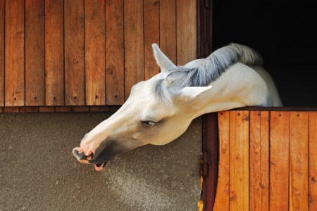 Horse in the stable