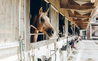 What are the stabling options for your new horse?