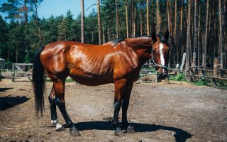 How to feed your horse right