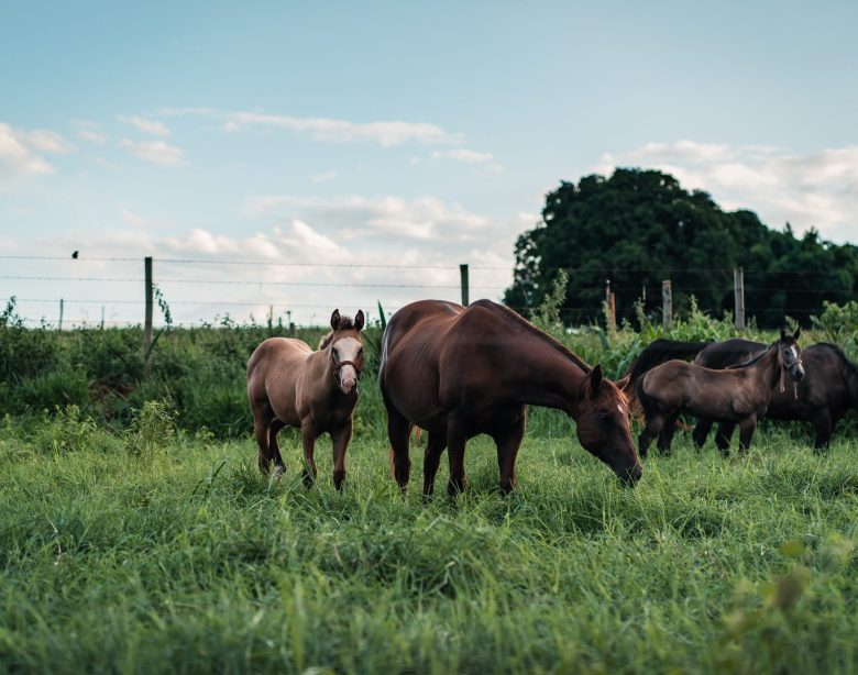 How to introduce your horse to pasture the right way