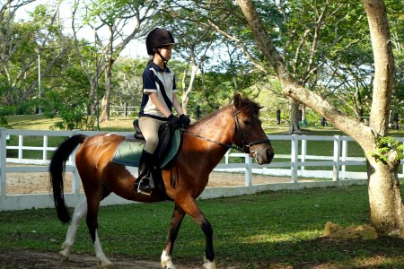 How to film your horse without an assistant